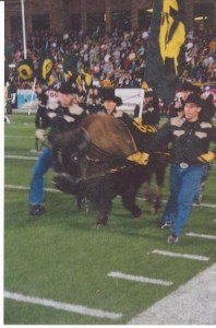 Ralphie leads the Buffs onto the field
